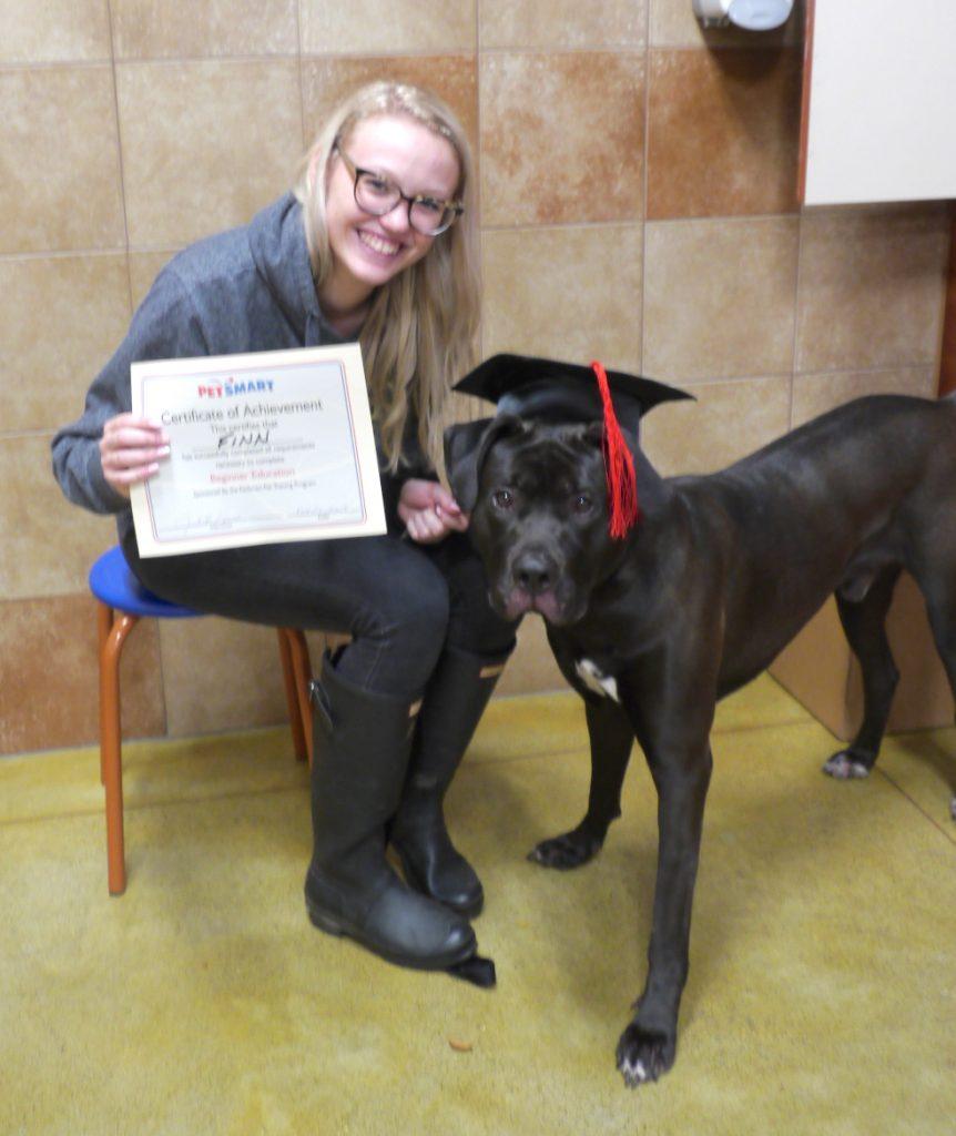 Dog Training Graduates mastiff