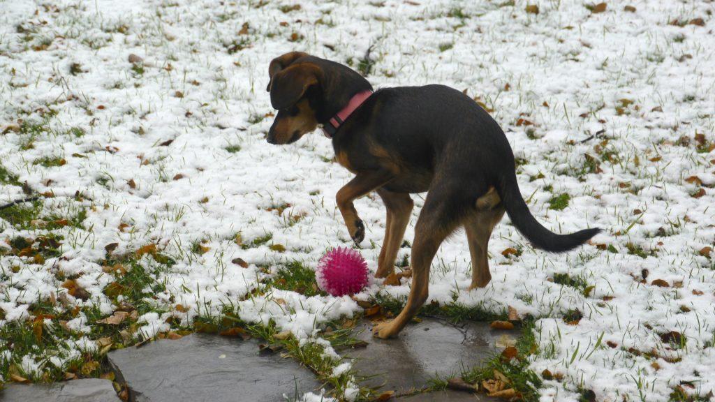 foster dog snow