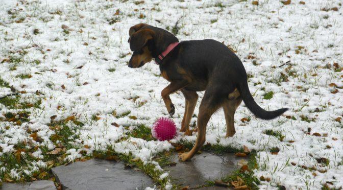 Foster Dog Stella's First Snow
