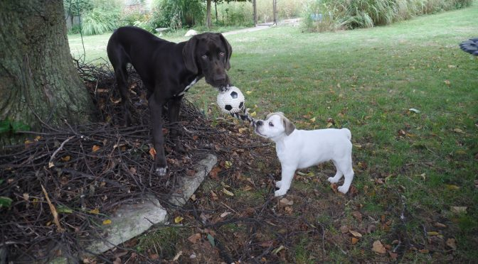 Friday Frolics – Puppy Playdates Are A Hit