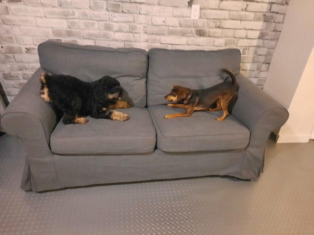 small dog social