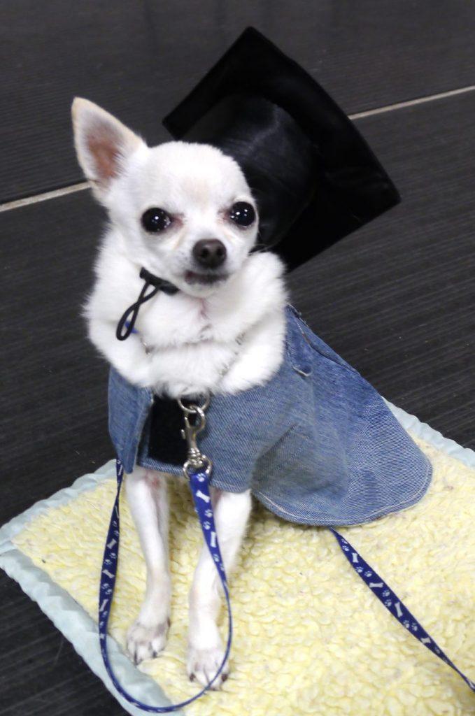 Jill Puppy Graduate